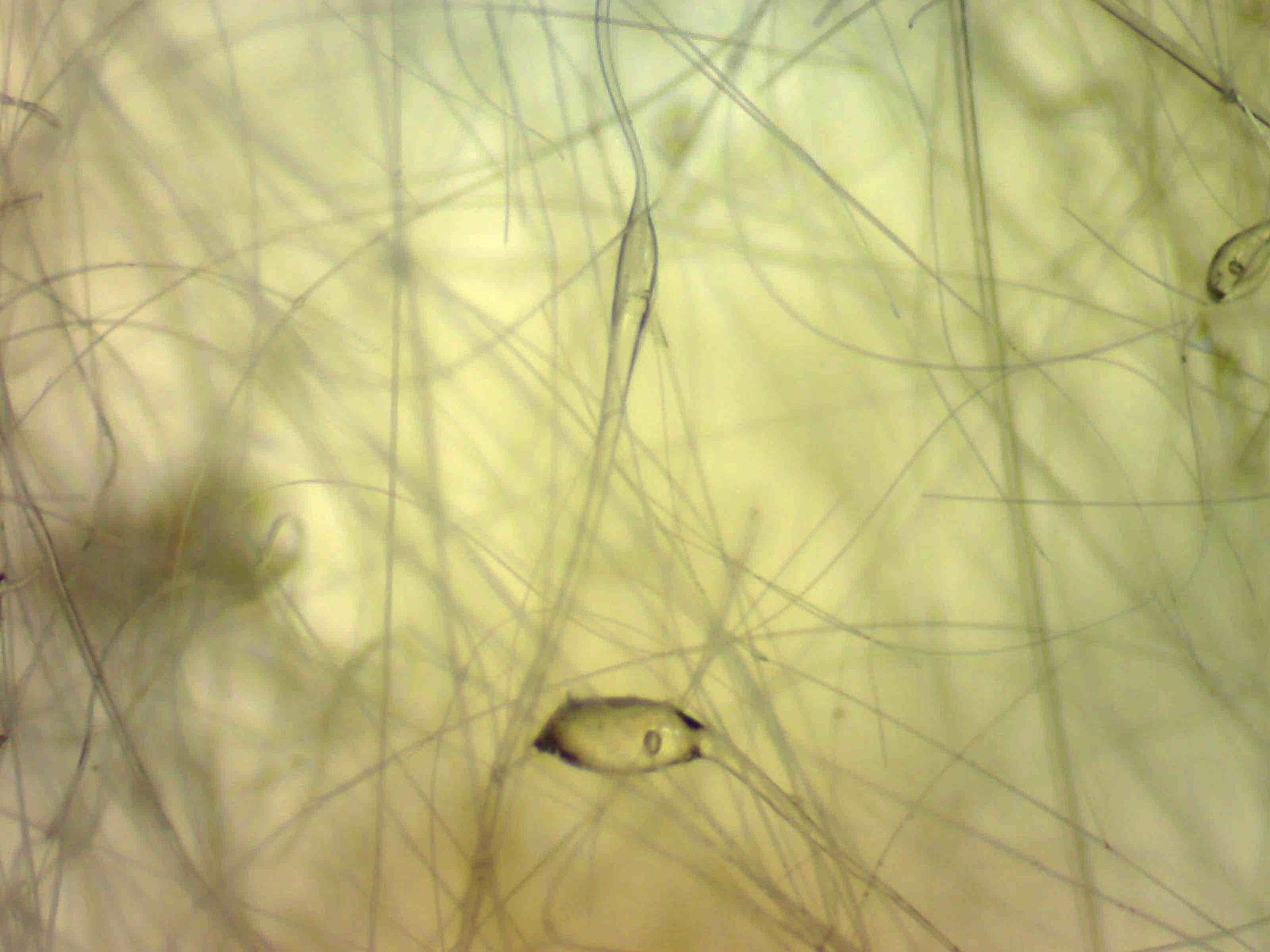 Matériaux fibres céramiques réfractaires Ouest Contrôle Environnement Amiante Prélèvement Analyse Désamiantage